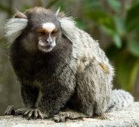 rio monkey