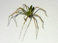 arachnophobia 6
