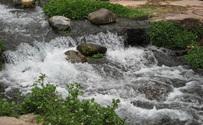 Creek Side 1