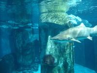 London Aquarium 2