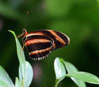 Butterfly macro 5