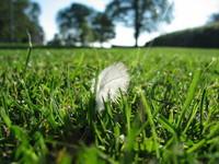 Feader on grass