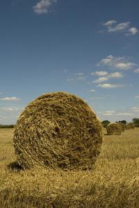 Harvest session::.. 2