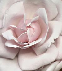 Marizpan Rose