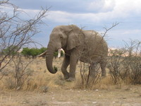 Africa Namibia 1