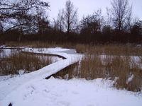 snow in alkmaar07