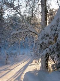 Sunny winter day 2