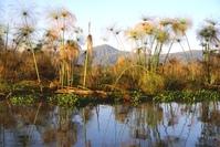 marvellous lake Naivasha
