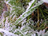 Iced 2