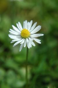 Daisy's 5