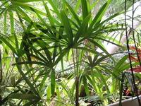 garden in the tropics