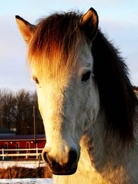 More horse pictures. 2