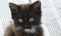 Eyes kitten