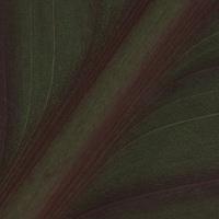 Leaf Macros - Cana