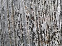 Textured Concrete