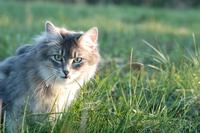cat story 25