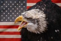 ICONIC IMAGE OF USA FLAG WITH BALD EAGLE