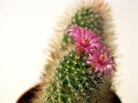 cactus white bg
