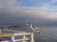 Seagulls in Sopot