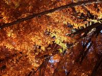 Autumn variations 2