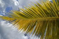 Palm 3