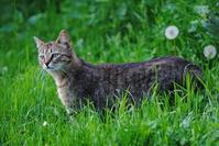 Feral cat Maya 4