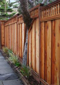 Tree/Fence