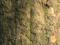 bark of a tree 5