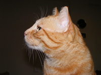 Leonardo The Cat 2