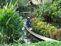 plants, thailand