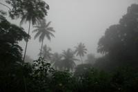 Misty Palms