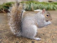 squirrel_0 1