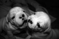 Baby Puppy's