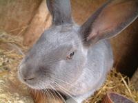 Inquisitive Rabbit