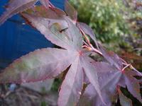 Leaf Textures 4