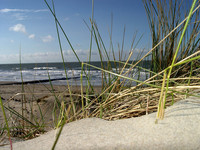 Dune Grass 003