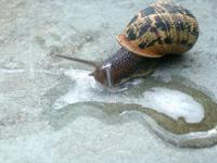 Snail Days 4