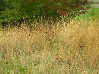 September grass