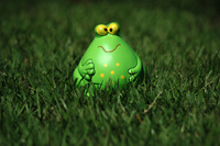 Toy toad