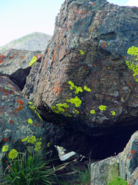 lichen moss and rocks 5