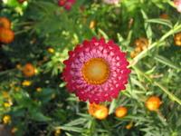 Flowers - Macro 300