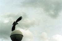 crowe 2
