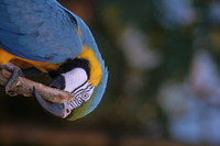Parrot on a stick 1
