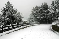 Snowie 1