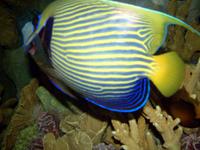 Tropical Fish 4