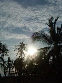 coco sun