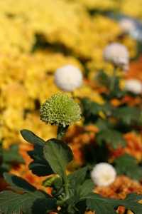 mum_ flowers 1