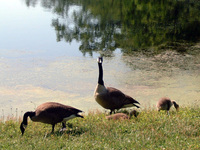 Feathered Family 2