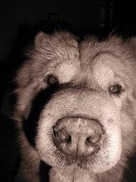 Sephia dog