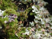 Oregon Moss 3